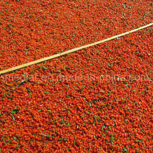Organic Ningxia Red Goji Berries --100% Super Raw Material pictures & photos