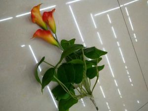 High Quality of Artificial Flowers Calla Lily Bush Gu1495809502928 pictures & photos