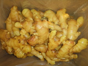 Best Quality Anqiu Ginger