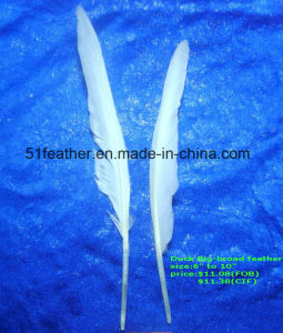 Big-Broad Duck Feather for Making Feather Crafts pictures & photos