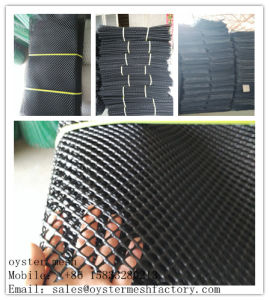 China Oyster Growing out Mesh Bag