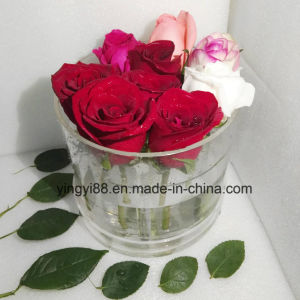 Waterproof Clear Acrylic Flower Storage Box /Rose Packing Box Shenzhen Manufacturer pictures & photos