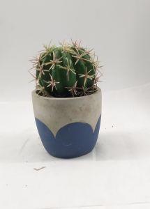 Hot Sale England USA Japan Promotion Artificial Various Colors Cactus pictures & photos