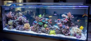 High Quality Big Size Glass Fish Aquaria pictures & photos
