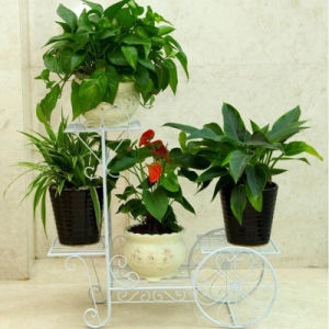 2017 New Indoor and Outdoor Bicycle Flower Plant Stand pictures & photos