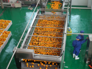 10t/H Orange Processing Line pictures & photos