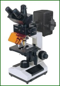 Fluorescent Microscope with CCD and Camera pictures & photos