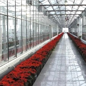 The Hot Sale and Easily Installed Multispan Glass Greenhouse pictures & photos