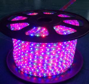 SMD5050 DC220V 120 LEDs/M LED Flexible Strip Light for Decoration pictures & photos