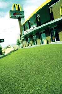 Artificial Turf for Decoration (E635216GDQ12041)