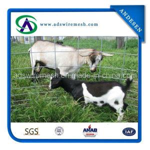 Economy Hog Panels/Sheep Panels pictures & photos