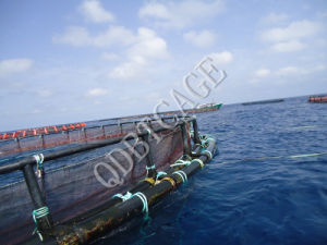 Aquaculture Circular Farming Rainbow Fish Cages /Net pictures & photos