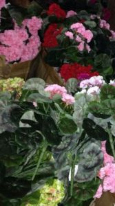 Best Selling Artificial Plants and Flowers of Gu-Jy-Grnm42L-60fl pictures & photos