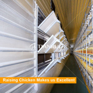 Tianrui Automatic Layer Broiler Poultry Chicken Farm Flooring System pictures & photos