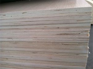 Okoume, Birch, Poplar, Pine, Oak, Maple, Spruce, Basswood, Ash Tree, Elm Plywood pictures & photos