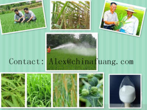 Agricultural Chemicals Bacteriacide Plant Fungicide Tc 95% Fosthiazate pictures & photos