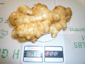 New Super Ginger (250G & UP) pictures & photos