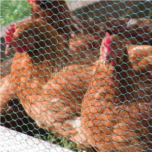 Garden Fence or Poultry Cage Hexagonal Wire Netting pictures & photos