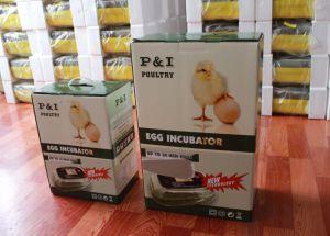 Egg Hatcher pictures & photos