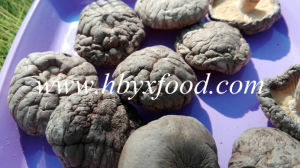 Dried Smooth Shiitake Mushroom with Good Price pictures & photos
