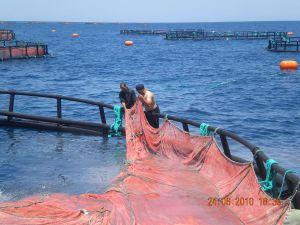 Aquaculture Net pictures & photos