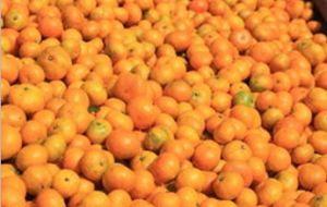 Samll Orange for Southeast Asia Market pictures & photos
