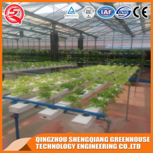 Agriculture Multi Span Hydroponics Polycarbonate Sheet Greenhouse for Vegetable Growing pictures & photos