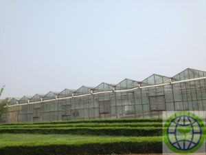 Antidrop Po Polyolefin Hot Melt Adhesive Film for Greenhouse pictures & photos