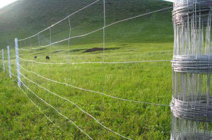 Farm Fence/ Glassland Saperation Fence pictures & photos