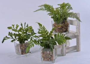 Kinds of Artificial Plants (Crowndaisy, celery etc) in Glass Potted for Decoration pictures & photos