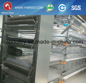 H Type 120 Birds Capacity Broiler Poultry Equipment in African Farm (H-4L120) pictures & photos