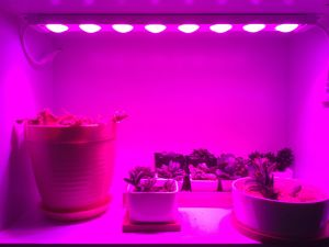 Input Voltage AC100~240V LED Grow Light Strip pictures & photos
