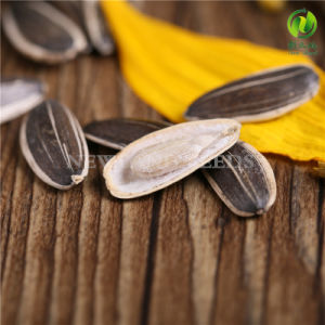 Export Sunflower Seeds 5009 for Wholesale pictures & photos