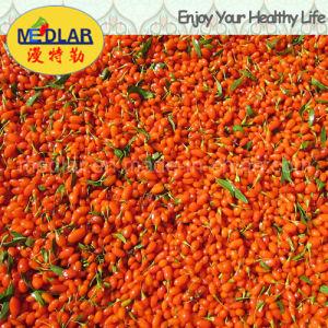 Medlar Lbp 2016 Fresh Ningxia Dried Goji