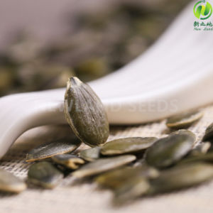 Inner Mongolia Most Popular Gws Pumpkin Seeds AA pictures & photos