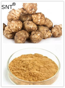 Jerusalem Artichoke Inulin Extract Powder, Helianthus Tuberosus L. Extract/Extract Powder