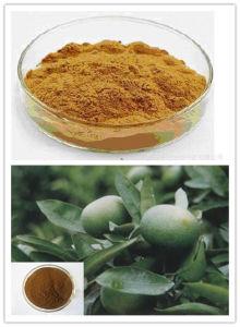 Good Slim Ingredient Synephrine 15% Citrus Aurantium Extract pictures & photos