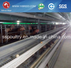 Lower Price 4/5/6 Tiers Automatic Poultry Equipment to Chicken Farm pictures & photos