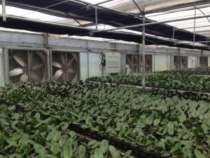 Metal Blade Material and Wall Fan Mounting Greenhouse Exhaust Fan pictures & photos