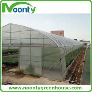 Single Tunnel Greenhouse for Farm and Agriculture with Hot-Galvanized Structures pictures & photos