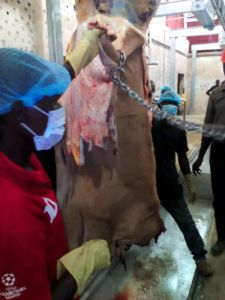 Cattle Bleeding Line pictures & photos