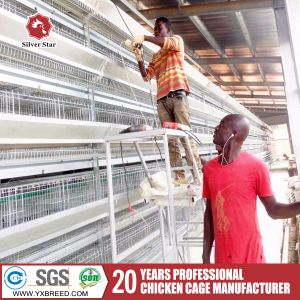 Cold Galvanized Chicken Cage From Silver Star for Big Farm pictures & photos