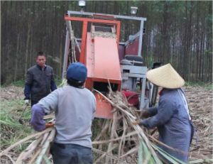 Oversea Hot Sale Sugarcane Leaf Stripping Machine/Sugarcane Leaves Stripper