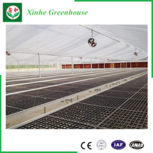 Muti Span Poly Greenhouse with High Quality for Vegetable pictures & photos
