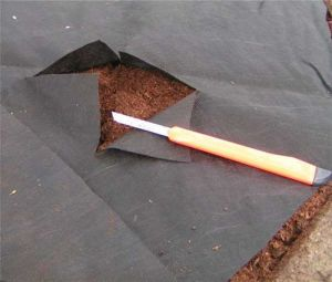 Black Ground Cover Nonwoven Fabric pictures & photos