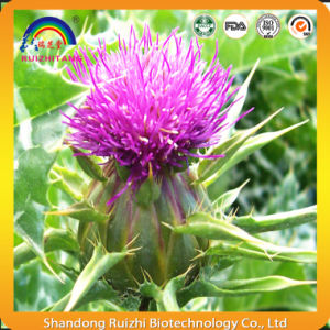 Plant Extract Milk Thistle Extract Powder pictures & photos