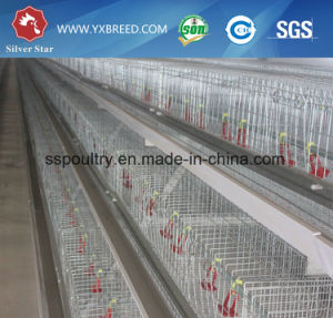 Layer Broiler a Type H Type Chicken House Chicken Cage pictures & photos