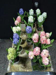 Artificial Flowers of Hyacinth Gu20170307155220 pictures & photos