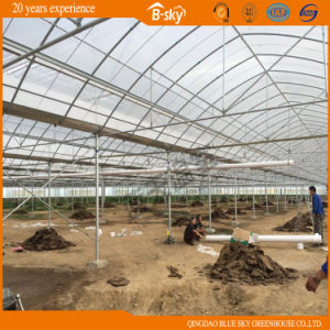 Arch Multi-Span Film Greenhouse for Planting Vegetables and Fruits pictures & photos
