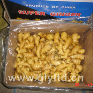 Fresh Ginger with New Crop pictures & photos